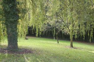 Terrain et arbres de la grande propriété à vendre en seine-et-marne