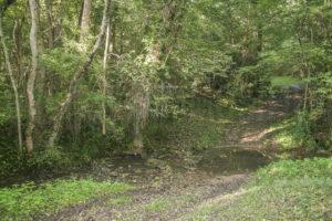 Bois du terrain de la grande propriété à vendre en seine-et-marne