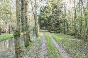 Chemin d'accès de la propriété à vendre