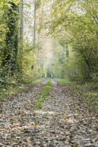 Chemin boisé