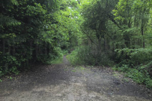 Chemin accès forêt du domaine à vendre proche Paris