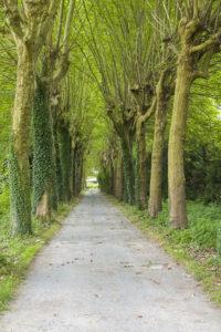 Allée arbre propriété à vendre Fontainebleau