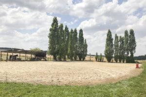 Carrière chevaux de la ferme équestre à vendre