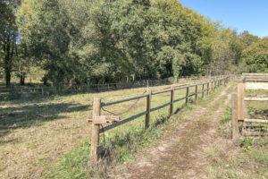 Terrain paddock pour chevaux