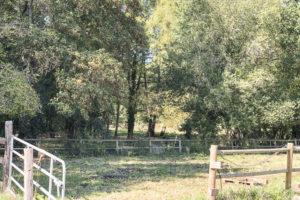 Paddock pour chevaux de la propriété à vendre