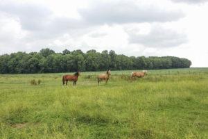 Pré pour chevaux