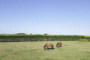 Terrain et chevaux propriété équestre à vendre