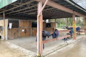 Boxes pour chevaux du centre équestre