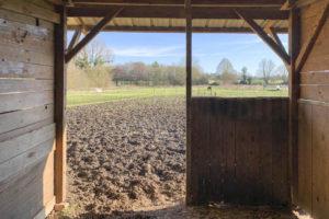 Boxe chevaux et terrain