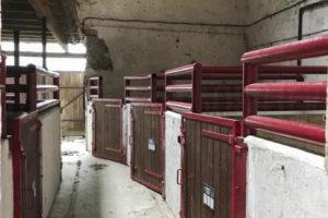 Les boxes à chevaux