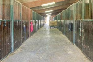 Ecurie et boxes chevaux