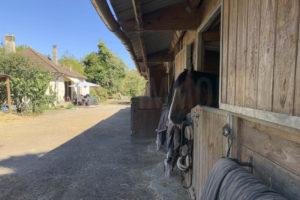 Boxe chevaux propriété équestre à vendre