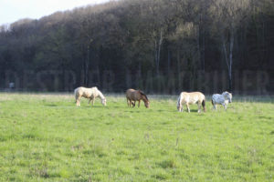 Prés chevaux propriété équestre à vendre