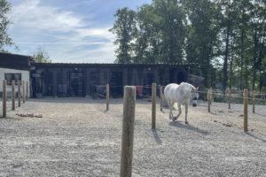 Ecurie propriété équestre à vendre Seine-et-Marne