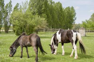 Paddocks chevaux immobilier équestre seine-et-marne 77